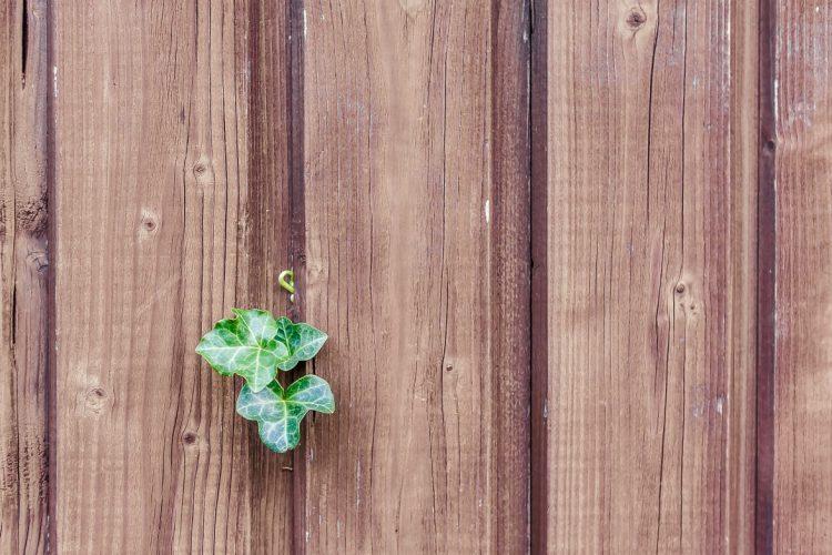 pannelli isolanti in fibra di legno